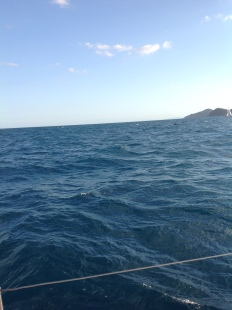 Whale glimpse