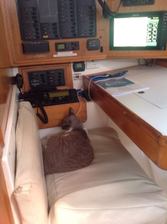 Race mode navigator cat