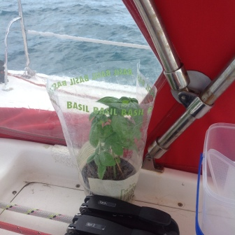 Cruising Basil makes a comeback