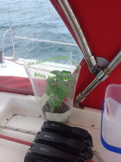 Cruising Basil makes a comeback