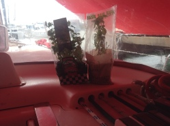 Cruising Basil and his new friend Killick Cilantro