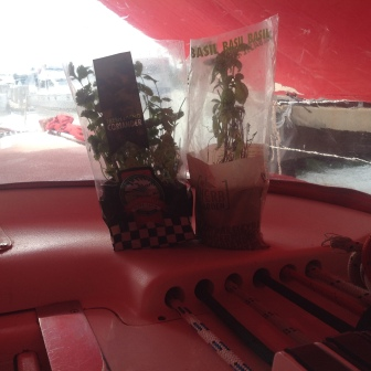 Cruising Basil and his new friend Killick Cilantro
