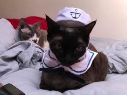 Sailor Noodles