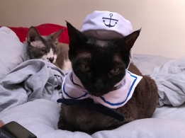 Sailor Noodles
