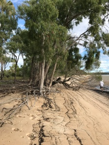 Beachfront, roots washed out