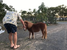 Pete getting acquainted with the miniature pony