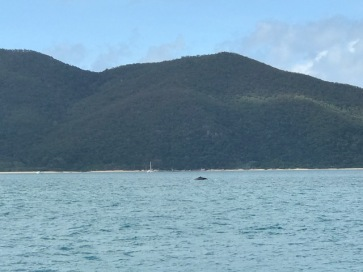 Whales as we left Scawfell