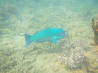 Blue fish!