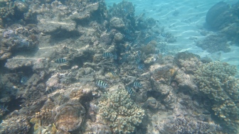 fish at Upolu reef