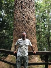 Big Kauri