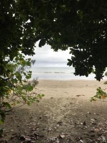 Rain forest meeting beach