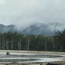 Beach meeting rain forest