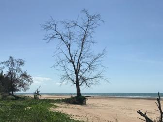 Casuarina Coastal Reserve beach