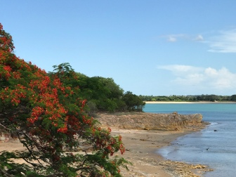 Flame Trees at East Point